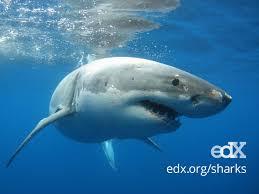 edx sharks