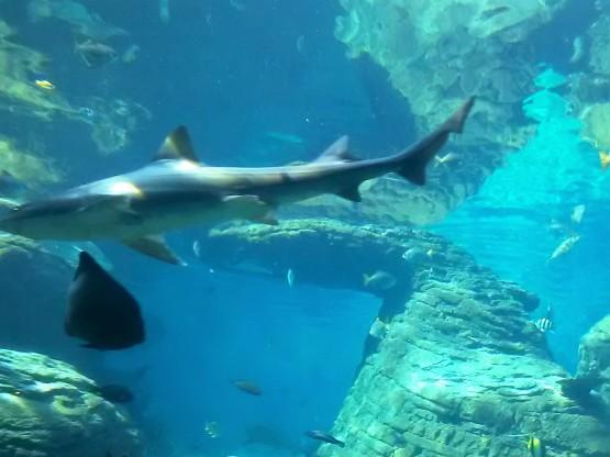ushaka-shark